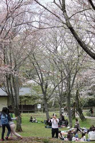佐倉城の桜風景02.JPG