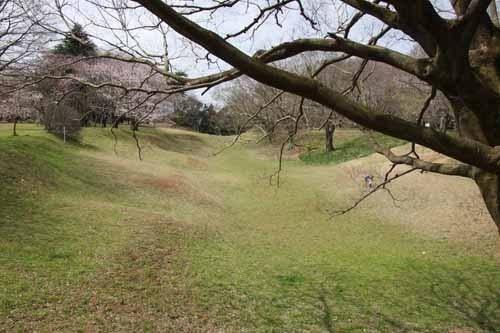 佐倉城の桜風景07.JPG