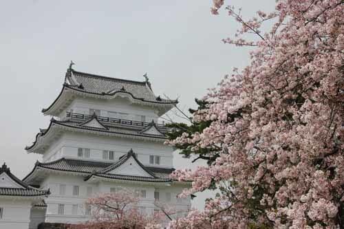 小田原城の桜20160410-07.JPG