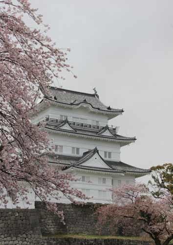 小田原城の桜20160410-08.JPG
