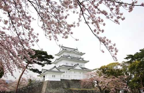 小田原城の桜20160410-09.JPG