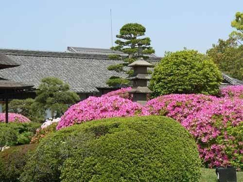 岡山城と花3.JPG