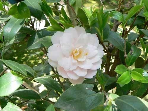 岡山城と花4.JPG