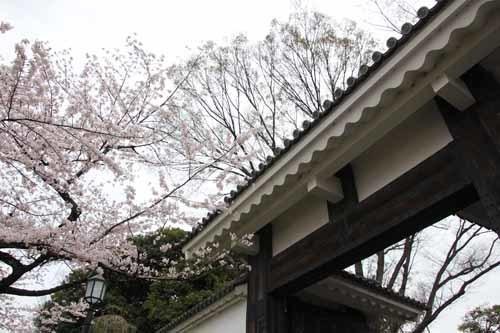 江戸城・千鳥ヶ淵の桜風景3.JPG