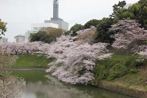 江戸城・千鳥ヶ淵の桜風景5.JPG