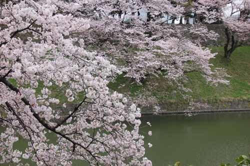 江戸城・千鳥ヶ淵の桜風景6.JPG