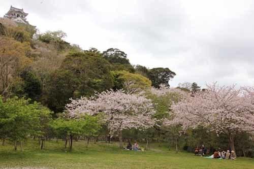 舘山城の桜1.JPG