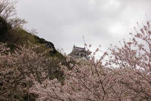 舘山城の桜2.JPG