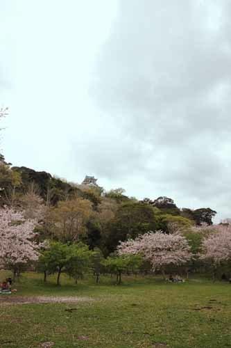 舘山城の桜3.JPG