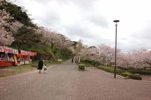 舘山城の桜4.JPG